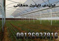 2231356_a4ayQ9_r_m