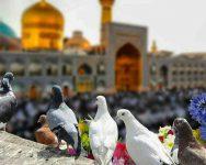 manli_mashhad3